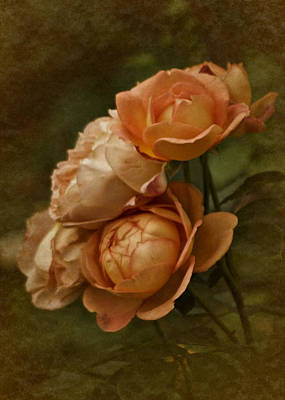 Photograph - Vintage Aug Roses by Richard Cummings