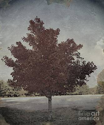 Photograph - Vintage Autumn Moment by Luther Fine Art