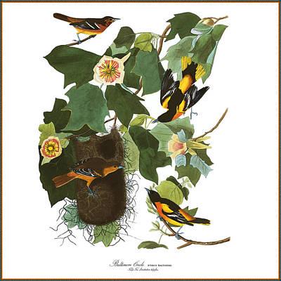 Oriole Digital Art - Vintage Baltimore Orioles Audubon  by Joy McKenzie