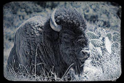 Bison Digital Art - Vintage Blue Bison by KJ DePace