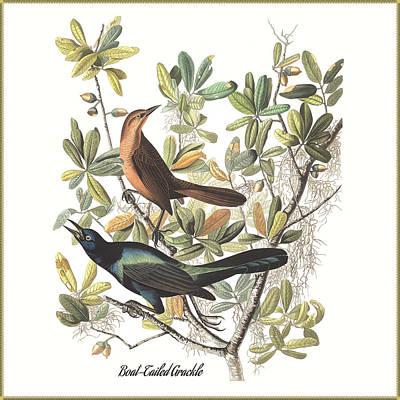Vintage Boat-tailed Grackles Audubon Art Print