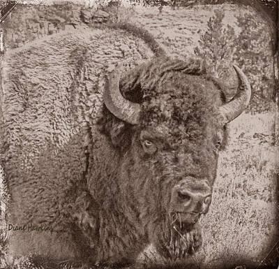 Railroad - Vintage Buffalo by Diane Hawkins