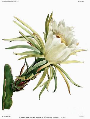 Graphic Design Digital Art - Vintage Cactus Flower by Ramneek Narang