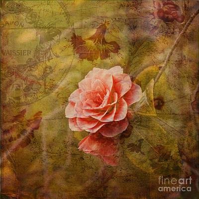 Photograph - Vintage Camellia by Liz  Alderdice