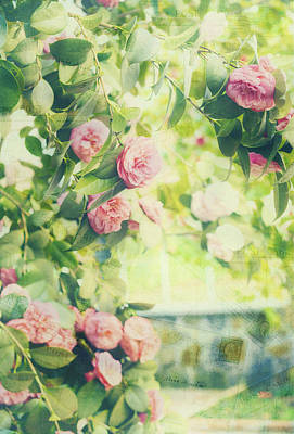 Photograph - Vintage Camellias I Postcards by Marianne Campolongo
