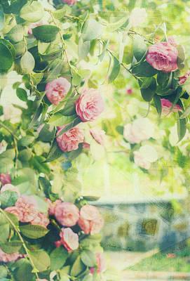 Camellia Photograph - Vintage Camellias I Postcards by Marianne Campolongo