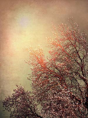 Photograph - Vintage Cherry Blossom by Wim Lanclus
