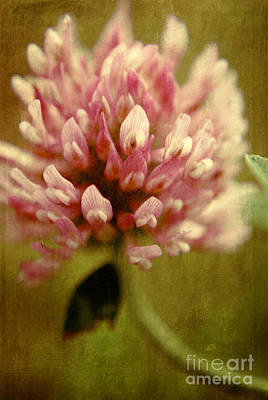Photograph - Vintage Clover by Aimelle