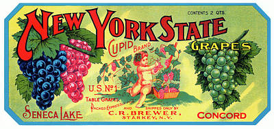Vintage Wine Lovers Photograph - Vintage Concord Grape Packing Crate Label C. 1920 by Daniel Hagerman
