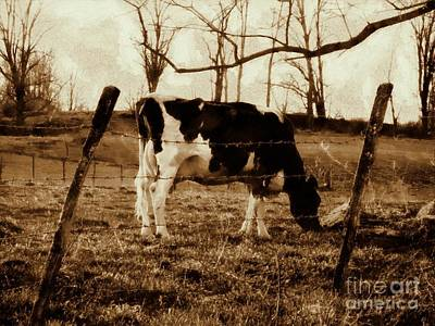 Photograph - Vintage Cow Grazing - Black And White Cow Sepia Brown Effect by Janine Riley