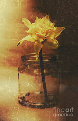 Daffodils Photograph - Vintage Daffodil Flower Art by Jorgo Photography - Wall Art Gallery
