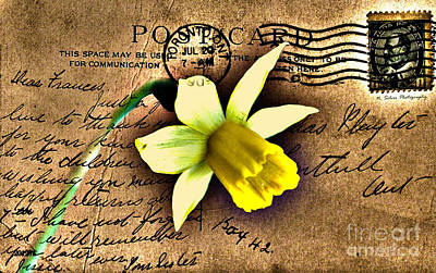 Photograph -  Daffodil On Vintage 1909 Postcard by Nina Silver