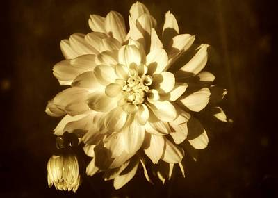 Oregon Art Digital Art - Vintage Dahlia by Cathie Tyler