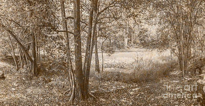 Vintage River Scenes Photograph - Vintage Deception Bay Woodland by Jorgo Photography - Wall Art Gallery