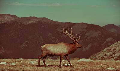 Photograph - Vintage Elk On Trail Ridge Road by Dan Sproul