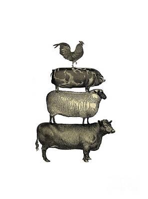Sheep Drawing - Vintage Farm Animals Tee by Edward Fielding