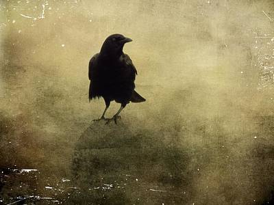 Brown Tones Photograph - Vintage Fog Crow by Gothicrow Images