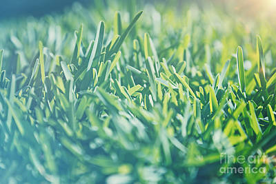 Photograph - Vintage Grass Background by Anna Om