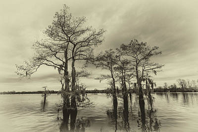 Photograph - Vintage Henderson Swamp  by Andy Crawford