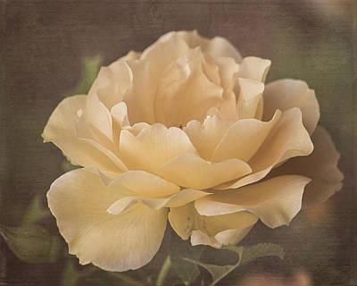 Photograph - Vintage Honey Perfume Rose by Teresa Wilson