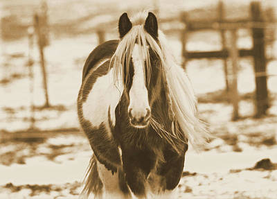 Vintage Horse On The Farm Art Print by Dan Sproul