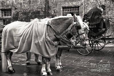 Vintage Horses In Salzburg Art Print by John Rizzuto