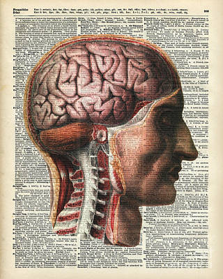 Human Head Drawing - Vintage Human Brain Anatomy by Jacob Kuch