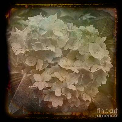 Photograph - Vintage Hydrangea  by Luther Fine Art