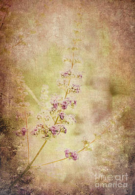 Photograph - Vintage Lavender by Andrea Anderegg