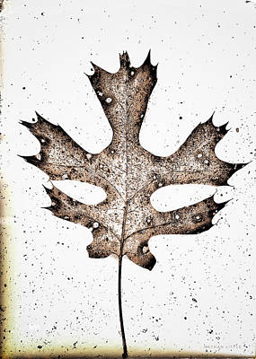 Photograph - Vintage Leaf by Nathan Little