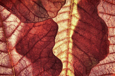 Photograph - Vintage Leaf Patterns I by Leda Robertson