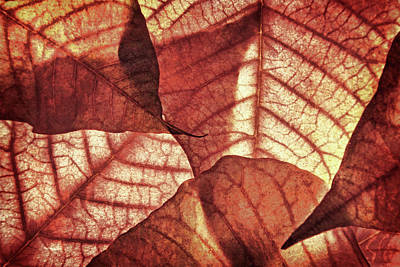 Photograph - Vintage Leaf Patterns II by Leda Robertson