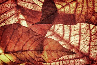 Photograph - Vintage Leaf Patterns 3 by Leda Robertson