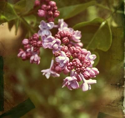 Purple Flowers Digital Art - Vintage Lilac by Cathie Tyler