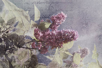 Photograph - Vintage Lilac Tree by Joann Vitali