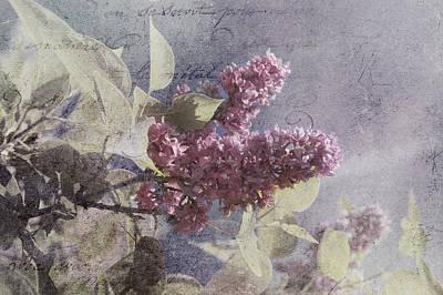 Photograph - Vintage Lilac Tree by Joann Vitali