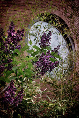 Photograph - Vintage Lilac Tree On Brick Architecture by Joann Vitali