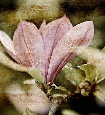 Abstract Flowers Mixed Media - Vintage Magnolia by Frank Tschakert