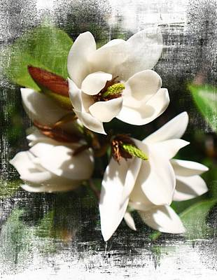 Vintage Magnolias Art Print