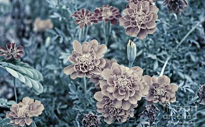 Photograph - Vintage Marigold by Megan Dirsa-DuBois