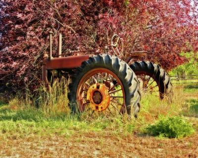 Photograph - Vintage Maroon And Red by Amanda Smith