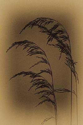 Photograph - Vintage Marshgrass by Dale Kauzlaric
