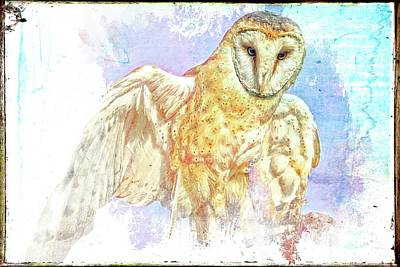 Photograph - Vintage Monkey Owl by Alice Gipson