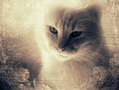 Animal Lover Digital Art - Vintage Morning Light by KaFra Art
