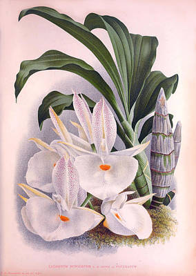 Painting - Vintage Orchids No.8 Lindenia Collection Of 1887 by Joy of Life Art Gallery
