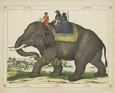 Animals Drawings - Vintage Painting of Men Riding an Elephant by VintageArtAssociates