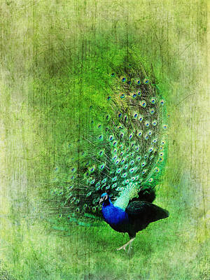 Painting - Vintage Peacock by Christina VanGinkel