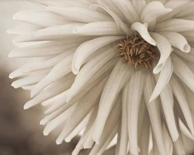 Photograph - Vintage Petals by Patricia Strand