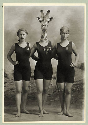 Vintage Photo Of A Giraffe And The Swim Team Print by Dylan Murphy
