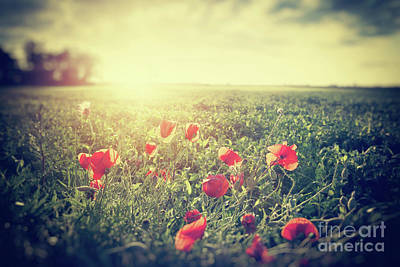 Photograph - Vintage Photograph Of A Poppy Meadow. Rural Landscape by Michal Bednarek